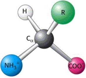 Forma de un aminoácido