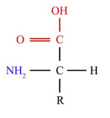Configuración L de un aminoácido