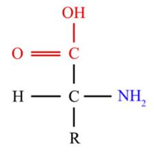 Configuración D de un aminoácido