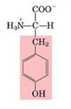 Aminoácido Tirosina