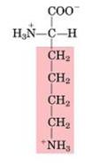 Aminoácido Lisina