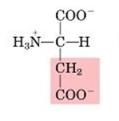 Aminoácido ácido aspártico