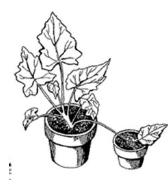 Dibujo representación de un acodo simple II