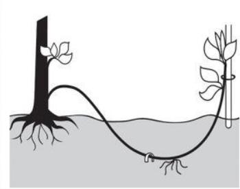 Dibujo representación de un acodo simple III