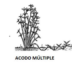 Dibujo representación de un acodo múltiple