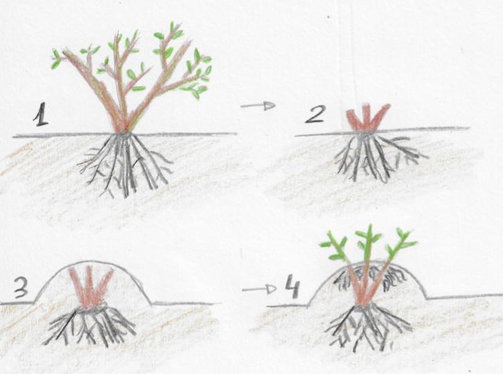Dibujo de acodos en amontonamiento