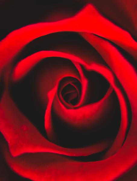 Las plagas más comunes del rosal