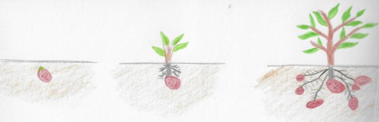 Dibujo de reproducción de plantas