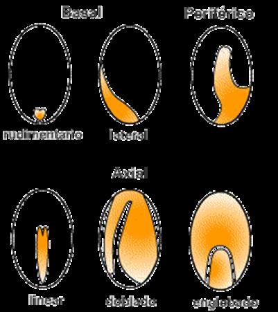 Forma de una semilla