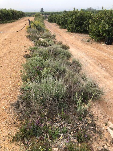 Seto con plantas autóctonas en Murcia.