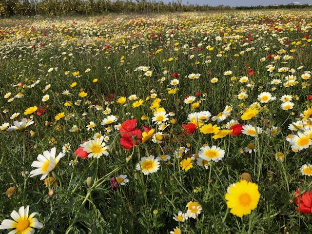 Zona de vegetación espontánea, un buen lugar para fomentar la biodiversidad y las poblaciones de insectos auxiliares.