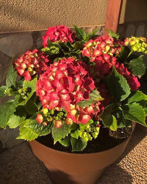 El cuidado de nuestras plantas y nuestro jardín. Parte primera. Insectos y ácaros