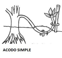 Dibujo representación de un acodo simple
