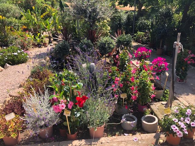 Imagen de jardín sin plagas