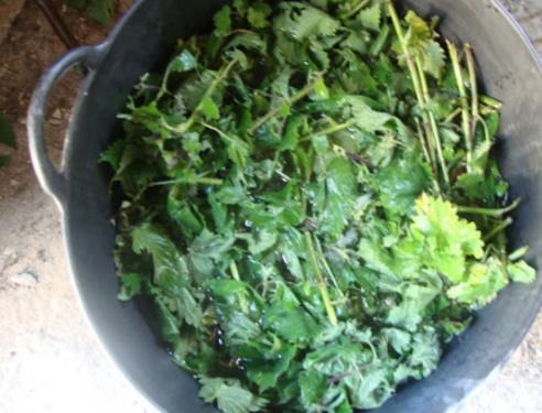 Imagen de preparación de extractos de plantas