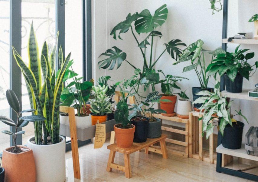 Depuración del aire de las viviendas mediante plantas ornamentales