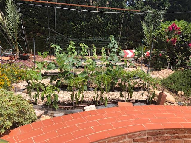 Julio y agosto en nuestros huertos y jardines