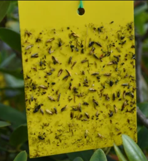 Imagen de trampas cromatográficas color amarillo