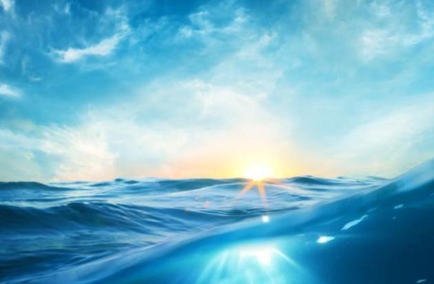 Las diatomeas: las algas como pulmón de los océanos