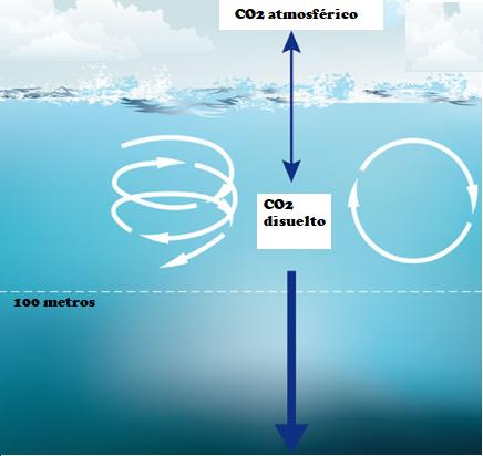 Proceso de respiración de los océanos
