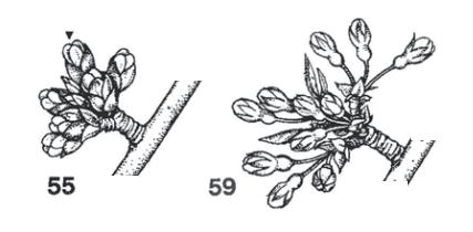 Imagen estados: 55 y 59