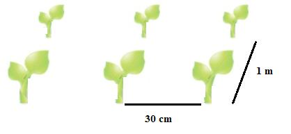 Distancia entre plantas